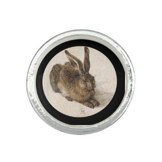 Ein junger Hase Foto Ring