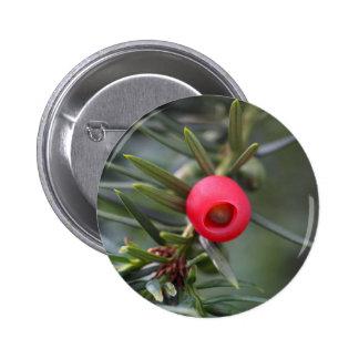 Ein Kegel einer Eibe (Taxus baccata) Runder Button 5,7 Cm