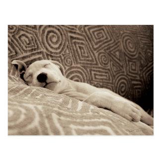 Ein müder Hund Postkarte