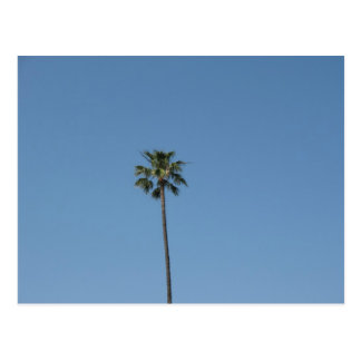 ein palmtree postkarte