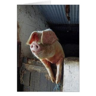 Ein sehr glückliches Schwein, Cornwall 2012 Karte