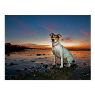 Ein sitzender Strand Jack-Russells Strand-| Postkarten