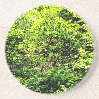 Ein weniger Weg im Holz Getränkeuntersetzer