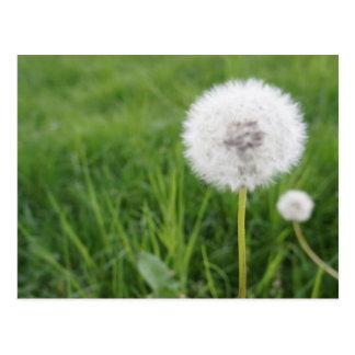 Eine Blume des Frühlings, um zu blasen! Postkarte