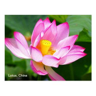 eine Postkarte von Lotos in der China