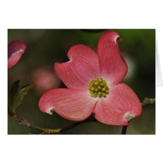 Eine roter Hartriegel-Blüte Karte