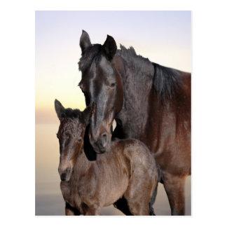 Eine Stute und ihr Babyfohlen Postkarte