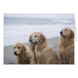 Einige goldene Retriever, die auf Strand sitzen Karte