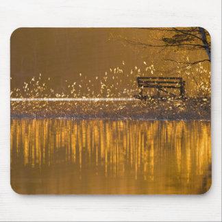 Einsame Bank durch den See im goldenen hellen Mauspads