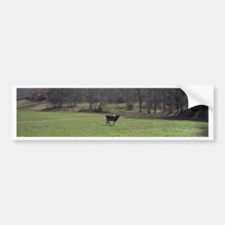 Einsame Kuh Autoaufkleber