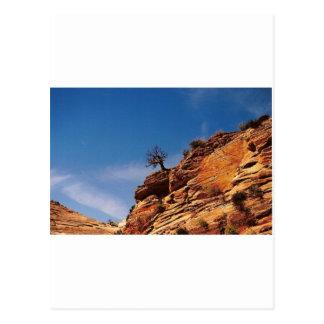 Einziger Baum Postkarte