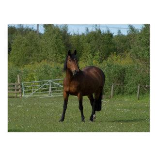 Einziges Pferd Postkarte