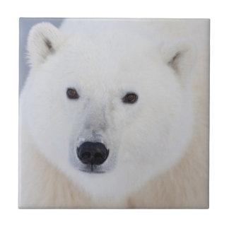 Eisbär Fliese