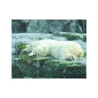 Eisbär Galerie Falt Leinwand