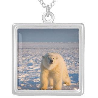 Eisbär, Ursus maritimus, auf Eis und Schnee, Versilberte Kette