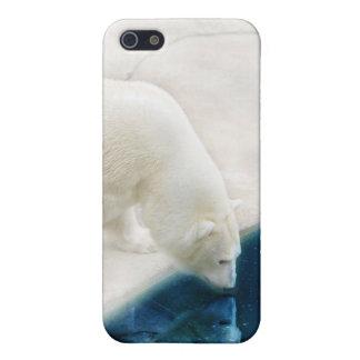 Eisbären iPhone 5 Hüllen