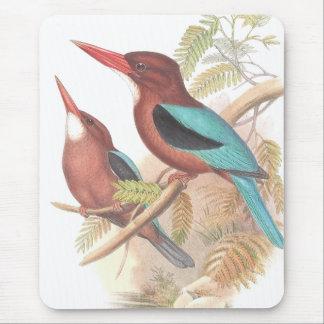 Eisvogel-Vogel-Tier-Tier-Teich Mauspad