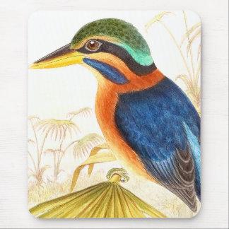 Eisvogel-Vogel-Tier-Tier-Teich Mauspads