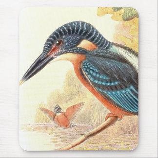 Eisvogel-Vogel-Tier-Tier-Teich Mousepad
