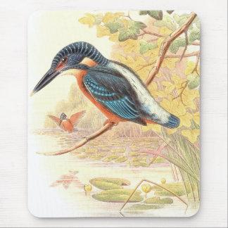 Eisvogel-Vogel-Tier-Tier-Teich Mousepads