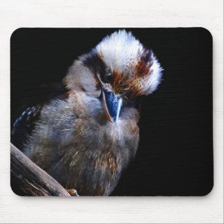 Eisvogelvogel Südafrika, Mauspad