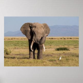 Elefant, der seinen Stamm wellenartig bewegt Poster