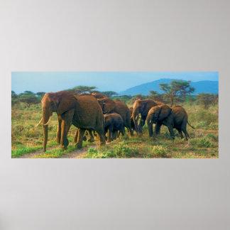 Elefant-Herden-Gehen Poster