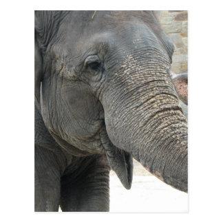 Elefant Postkarte