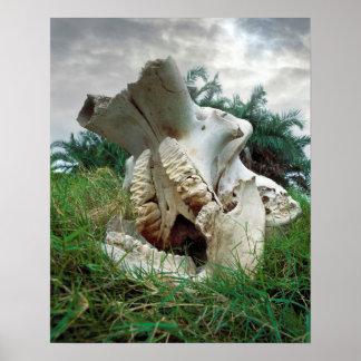 Elefant-Schädel Poster