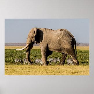 Elefant und Zebras bei Waterhole Poster