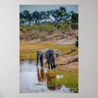 Elefanten bei einem Waterhole Poster