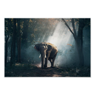 Elephant Photography Poster