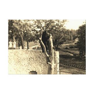 Elgin Illinois Lords Park 1890's Fotografie-Bär Leinwanddruck