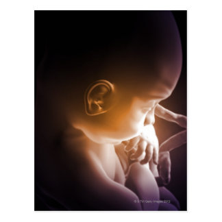 Embryonale Entwicklung 5 Postkarte