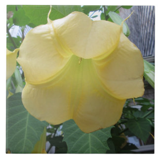 Engels-Trompete-goldene gelbe Blume Keramikfliese