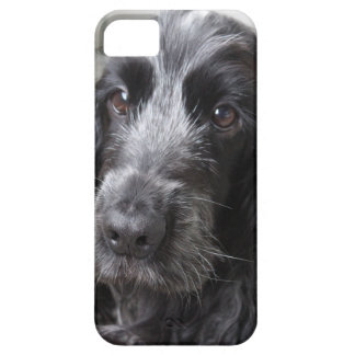 Englisch Cocker spaniel iPhone 5 Etui
