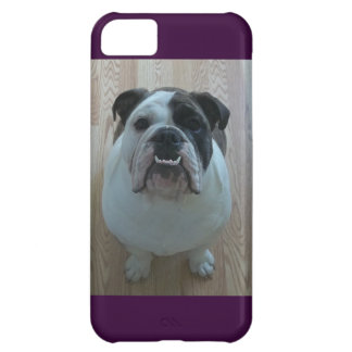 Englischer Bulldogge iPhone 5 Fallhalter iPhone 5C Hülle