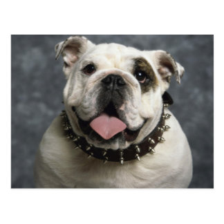 English Bulldog Postkarte