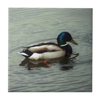Ente am Wasser Keramikfliese