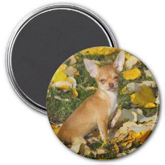 Entzückender Chihuahua-Welpe zwischen gelbem Runder Magnet 7,6 Cm