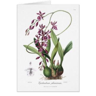 Epidendrum Phœniceum Grußkarte