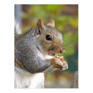 Erhaltene Nüsse? Postkarte