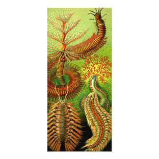 Ernst Haeckel Chaetopoda Bedruckte Werbekarte