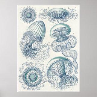 Ernst Haeckel-Kunst-Druck: Leptomedusae Poster