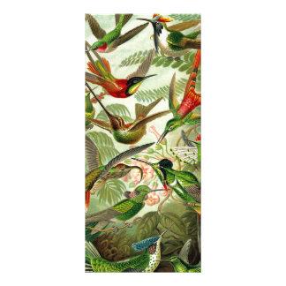 Ernst Haeckeltrochilidae-Kolibri Karten Druck