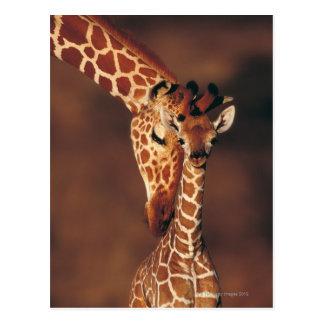 Erwachsene Giraffe mit Kalb (Giraffa camelopardali Postkarten