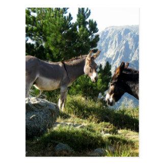 Esel von Korsika Postkarte