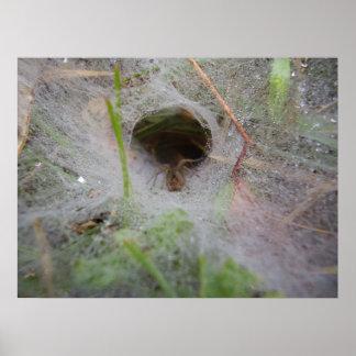 Europäisches Trichter-Web spider Plakat
