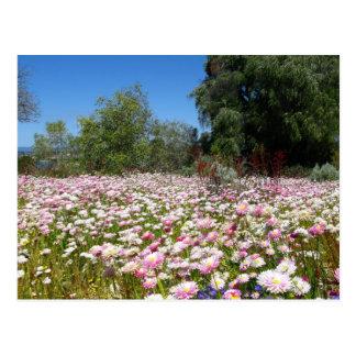 Ewig Blumen Postkarte