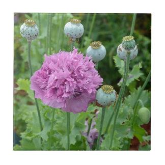 Extravagante lila Mohnblumen-Blumen Kleine Quadratische Fliese